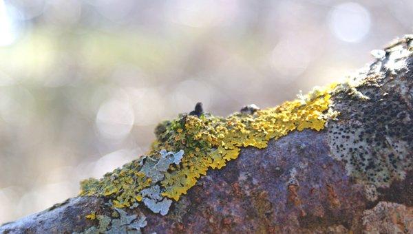 Detalle corteza de árbol