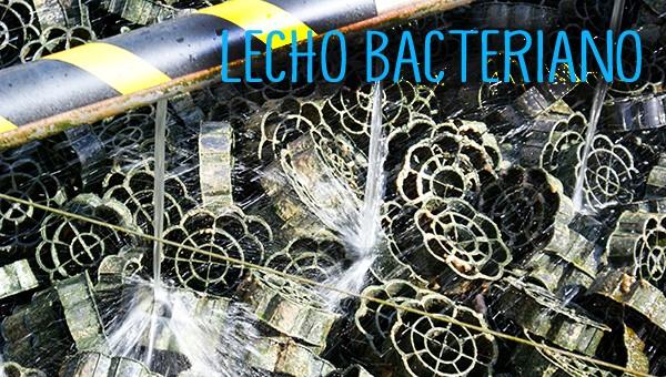 Lecho bacteriano